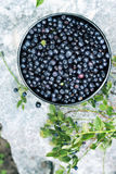 Forest blueberries, top view Stock Photos