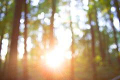Forest blur baground stock photo