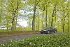 Forest,blurred car in springtime Stock Image