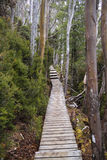 Forest Boardwalk. Boardwalk heading off into a forest and up an incline stock photo