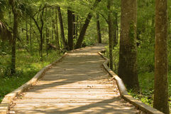 Forest Boardwalk Stock Photography