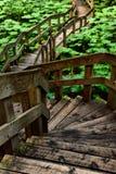 Forest Boardwalk Arkivfoto