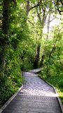 Forest Boardwalk Images libres de droits