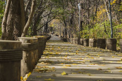 The forest boardwalk royalty free stock photo
