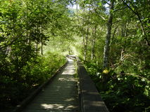 Forest Boardwalk Royalty Free Stock Photos