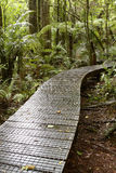 Forest boardwalk Royalty Free Stock Image