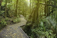 Forest boardwalk Stock Image