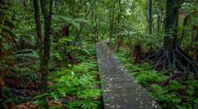 Forest boardwalk Stock Photos