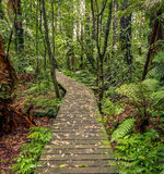 Forest boardwalk Stock Images