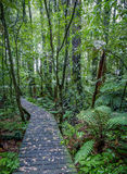 Forest boardwalk Royalty Free Stock Images