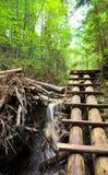 Forest boardwalk in Slovakia Paradise Royalty Free Stock Photos