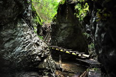 Forest boardwalk in Slovakia Paradise Royalty Free Stock Photo