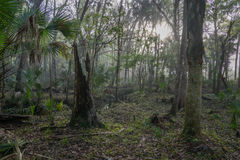 A Forest Bog on a Central Florida Hike Stock Photo