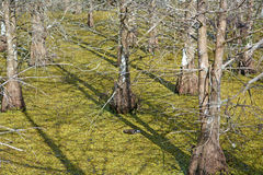 Forest bog Stock Photography