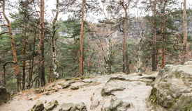 Forest in Bohemian Switzerland Stock Photos