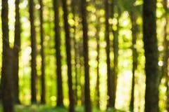 Forest Bokeh In Daylight immagine stock libera da diritti