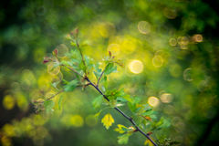 Forest bokeh. Forest nature detail background in spring. Special swirly bokeh oh helios lens stock image