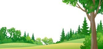 Forest border. Illustration of a summer forest Stock Image