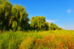 Forest border Stock Photography