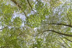 Forest bottom view green tree natural outdoor park Royalty Free Stock Image