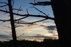 Forest Branch till färgrik himmel Arkivfoton