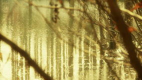 Forest and branches reflection in swamps wetlands water,Sparkling ripple,snow. stock footage