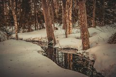 Forest breaks a path through the snow and ice. The river flows into a winter lake, but this is not where its way ends royalty free stock photo