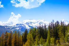 Forest with breathtaking Swiss mountains Stock Photos