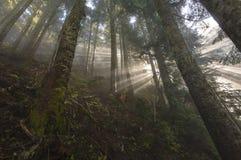Forest Breeze Foto de archivo libre de regalías
