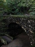 Forest Bridge fotografie stock libere da diritti