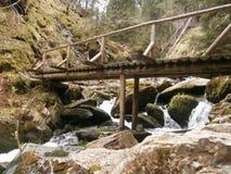 Forest Bridge Imágenes de archivo libres de regalías