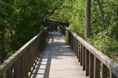 Forest bridge. Acarlar longoz eregli Royalty Free Stock Photo