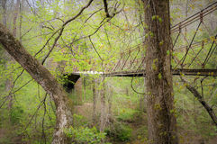 Forest Bridge on Natchez Trace. Tangled green dense forest nearly obscures the aged Tishomingo stone and wood swinging bridge Stock Photography
