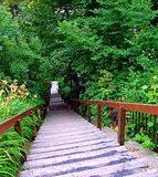 Forest, bridge, nature, path, park, wood, wooden, green, tree, trees, trail, footpath, landscape, walkway, jungle, garden, way. Pathway, boardwalk, woods Royalty Free Stock Photography