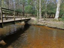 Forest Bridge Over Stream Immagine Stock