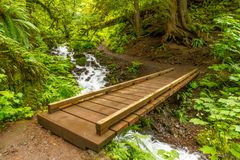 Forest Bridge Over Water Cascade stock foto