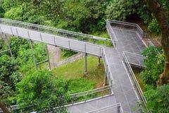 Forest Bridge In Singapore Stock Photo