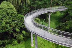 Forest Bridge In Singapore Stock Photos