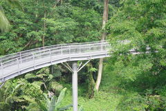 Forest Bridge In Singapore Royalty Free Stock Images