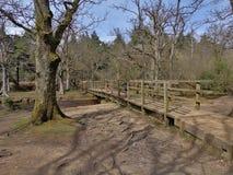 Forest Bridge Stock Photography