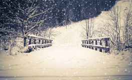 Forest bridge in winter Stock Image