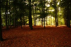 Forest in bright autumn colors stock images