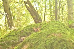 Grassy knoll in the forest stock image