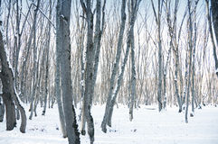 Forest on a bright sunny winter Royalty Free Stock Images