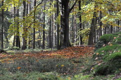 The forest. Broadleaved trees in the forest Royalty Free Stock Images
