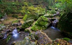 Forest brook Stock Photos
