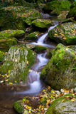Forest Brook Royalty Free Stock Photos