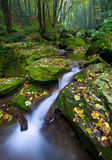 Forest brook Royalty Free Stock Images