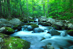 Forest brook. A brook flowing through forest Stock Photo