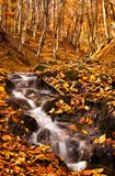 Forest brook in autumn Royalty Free Stock Image